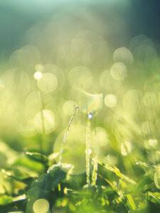 Rasen mit Tau