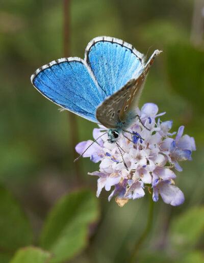 Blume mit blauem Schmetterling