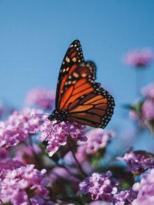 Garten mit Schmetterling
